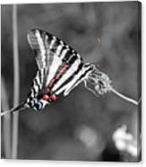 Zebra Swallowtail Butterfly 2016 Canvas Print