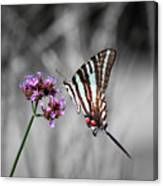 Zebra Swallowtail Butterfly And Stripes Canvas Print