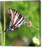 Zebra Swallowtail Butterfly In Garden 2016 Canvas Print