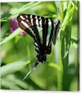 Zebra Swallowtail Butterfly In Green Canvas Print