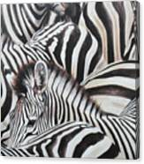 Zebra Triptyche Middle Canvas Print