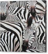 Zebra Triptyche Right Canvas Print