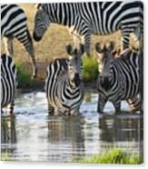 Zebra15 Canvas Print