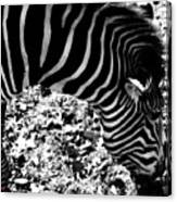Zebra2 Canvas Print