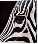 Zebras Eye Canvas Print