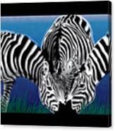 Zebras In Blue Oasis Canvas Print