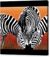 Zebras In Sunset Field Canvas Print