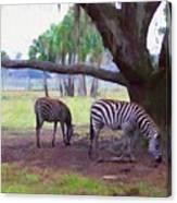 Zebras Under Oaks Canvas Print