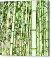 Zen Bamboo Forest Canvas Print