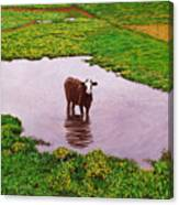 Zen Cow Canvas Print