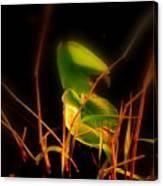 Zen Photography - Sunset Rays Canvas Print