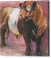 Zeus  Red Belted Galloway Bull Canvas Print