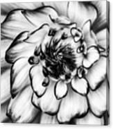 Zinnia Close Up In Black And White Canvas Print