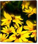 Zinnia Flower Canvas Print