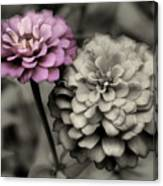 Zinnia Flower Pair Canvas Print