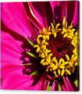 Zinnia In Evening Light Canvas Print