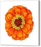 Zinnia In Orange Canvas Print