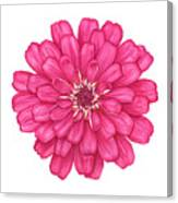 Zinnia In Pink Canvas Print