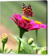 Zinnia Visitor Canvas Print