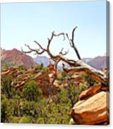 Zion Hike 1 View 4 Canvas Print