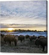 Zion Mountain Ranch Buffalo Herd Canvas Print