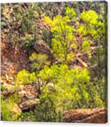 Zion National Park Small Tributary Of The Virgin River Canvas Print