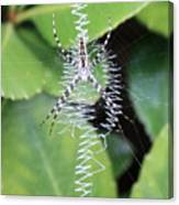Zipper Spider Canvas Print