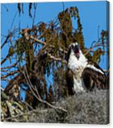 Zombie Osprey Crying For Brains Canvas Print