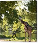 Zoo Landscape Canvas Print