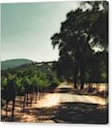 A Drive Through Napa Valley Canvas Print