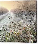 Autumn Frosts Canvas Print