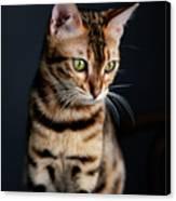 Bengal Cat Portrait Canvas Print