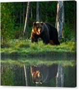 Big Brown Bear Walking Around Lake In Canvas Print