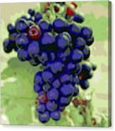 Blue Grape Bunches 6 Canvas Print