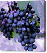 Blue Grape Bunches 7 Canvas Print