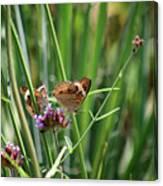 Buckeye Butterflies Canvas Print