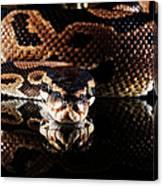 Burmese Python Canvas Print