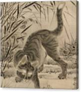 Cat Catching A Frog Canvas Print