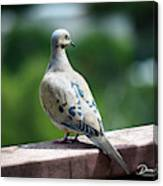 Dove On The Deck Canvas Print