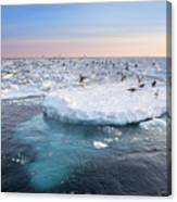 Drift Ice In Shiretoko, Hokkaido, Japan Canvas Print