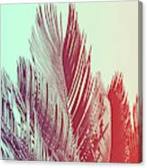 Duotone Background Of Tropical Palm Leaves Canvas Print