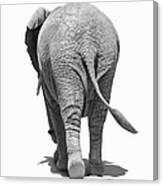 Elephants Behind Canvas Print