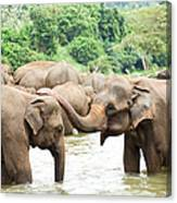 Elephants In River Canvas Print