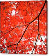 Fall Colors In Japan Canvas Print