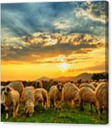 Flock Of Sheep Grazing In A Hill At Canvas Print