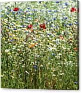 Flower Meadow Canvas Print