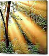 1 Forest Rays Canvas Print