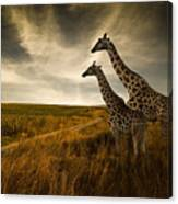 Giraffes And The Landscape Canvas Print