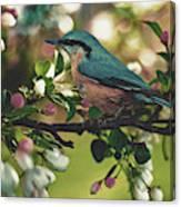 Harbinger Of Spring Canvas Print