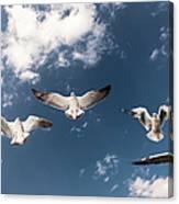 Myanmar, Inle Lake, Seagulls Inflight Canvas Print